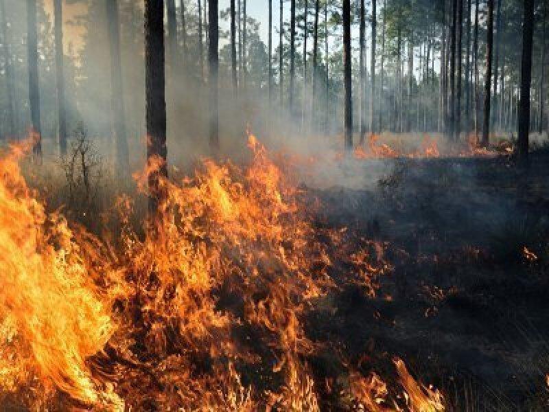 Bushfire Is a Real Risk In Australia